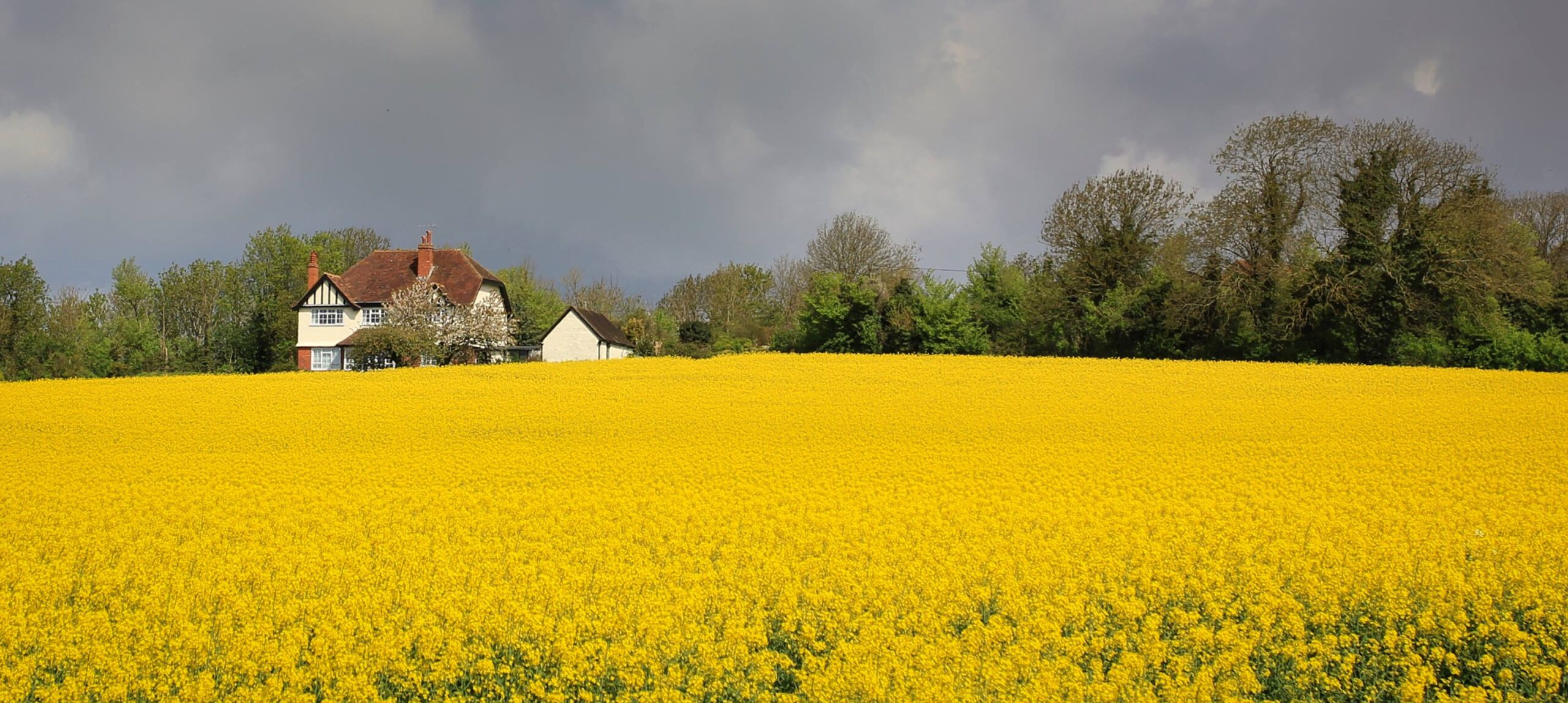 field_yellow_EH